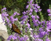 Ovih šest biljaka izlečiće vaše disajne organe i pluća