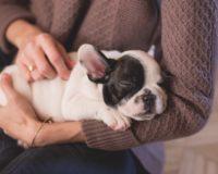 6 razloga zašto bi trebalo da nabavite psa
