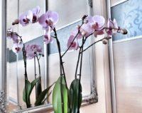 Orhideja – cveće koje će ulepšati svaki dom