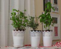 Zasadite ove biljke kod kuće i imaćete mnoge koristi