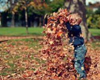 Evo u čemu možemo da uživamo ove jeseni!